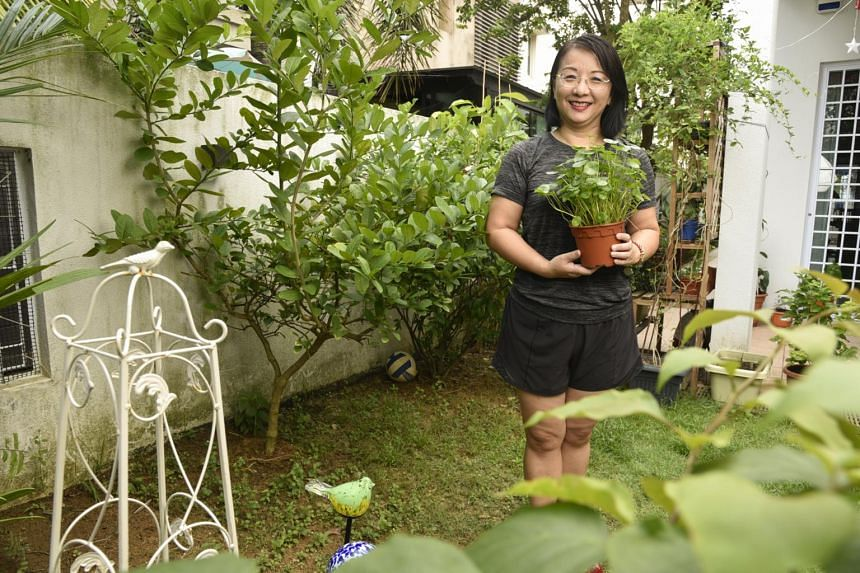 Ms Shirley Jin has planted kang kong, cucumber, bok choy and ladies' fingers using seeds given by NParks.