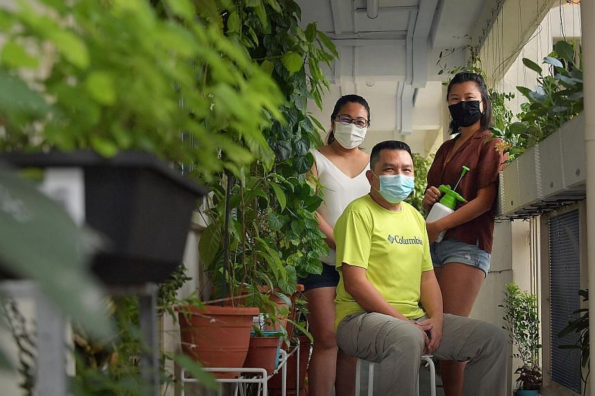 Mr Jack Yam, 49, who runs Facebook group Urban Farmers (Singapore), with neighbours Grace Lin (left), 35, and Deborah Ong, 27. He has been encouraging his neighbours to take up edibles gardening. Close to half a million seed packets have been distrib