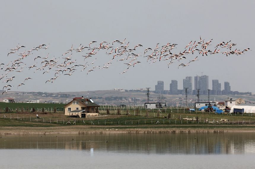 Flamingos fly over a lake in the Golbasi district of Ankara, on May 8, 2021.