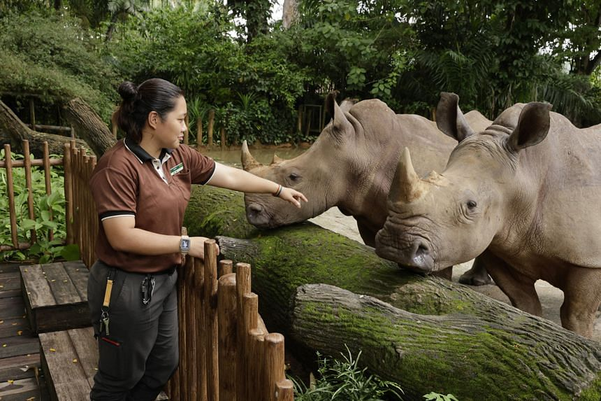 Zoo Explained! will have question-and-answer sessions with Ms Indah, the keeper in charge of the newest baby rhinoceros.