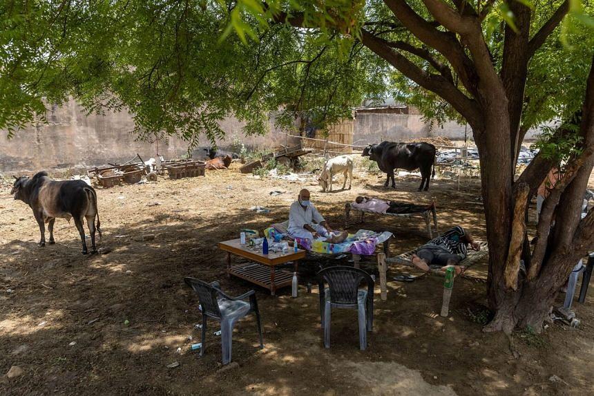 Village practitioners of alternative medicine have set up an open-air clinic in Mewla Gopalgarh, Utta Pradesh, India.