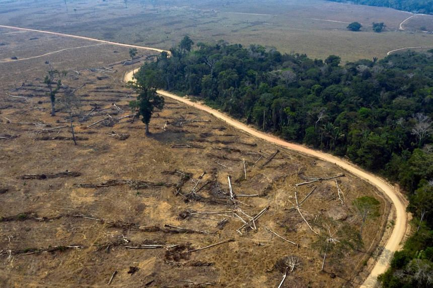 Brazilian President Jair Bolsonaro has presided over a surge in deforestation in the world's biggest rainforest since taking office in 2019.