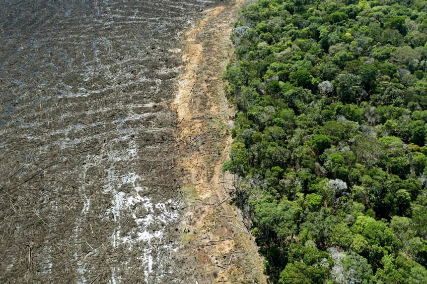 Palm oil cultivation in Indonesia, and soy and beef farming in Brazil were the key drivers of illegal deforestation.
