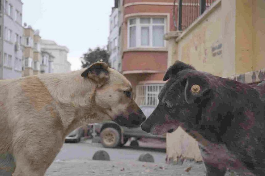 In the documentary Stray, Hong Kong film-maker Elizabeth Lo shows a canine pack in its natural state as her camera follows the animals from beach and park to construction site and busy shopping district.