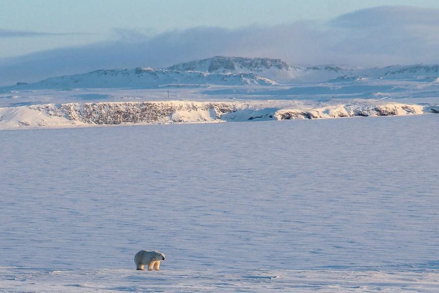 Since 1971, the Arctic's average annual temperature rose by 3.1 deg C compared to 1 deg C for the planet as a whole.