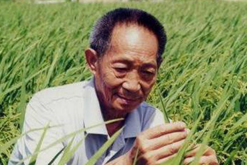 Yuan cultivated the world's first high-yielding hybrid rice strain in 1973.