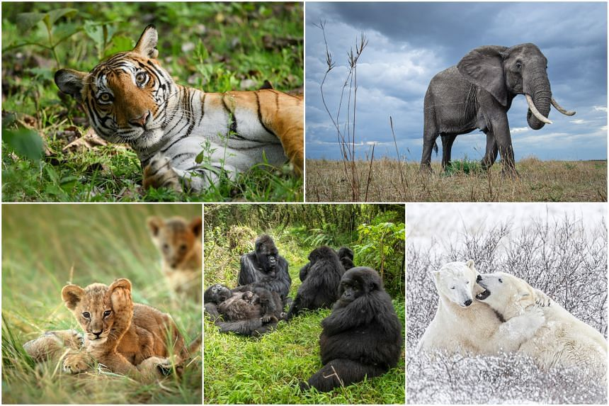 A New Big Five global project takes a revitalised perspective on wildlife with photography.