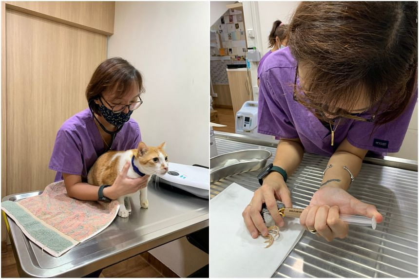 Ms Evonne Yong, head veterinary nurse at The Animal Clinic (Sunset Way), attending to a cat and a baby mynah.