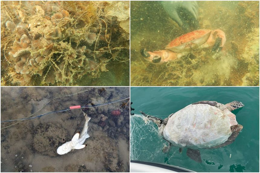 Sea creatures have been found trapped in drift nets in Singapore waters.