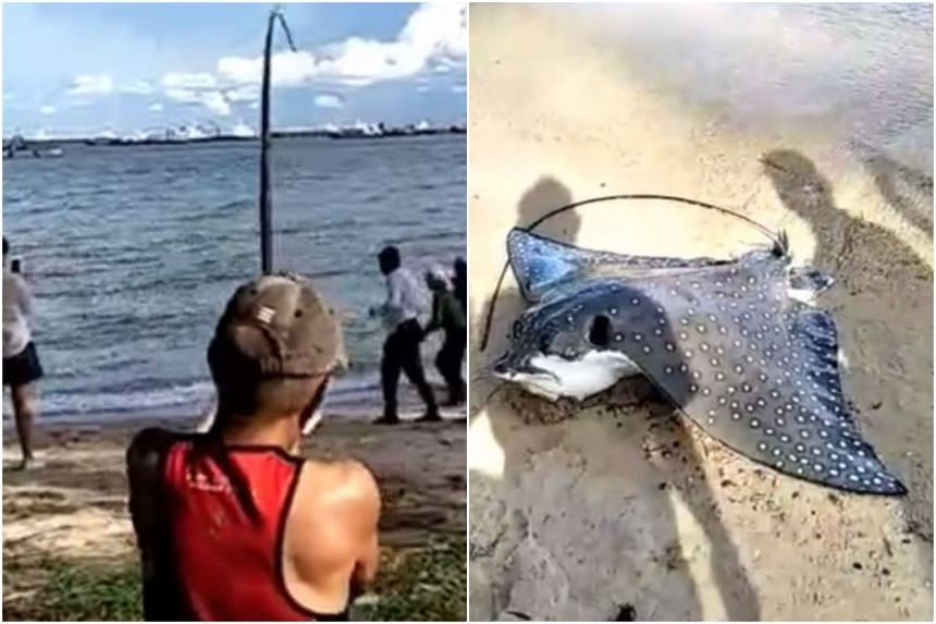Many netizens said they hoped the animal was released back to sea.
