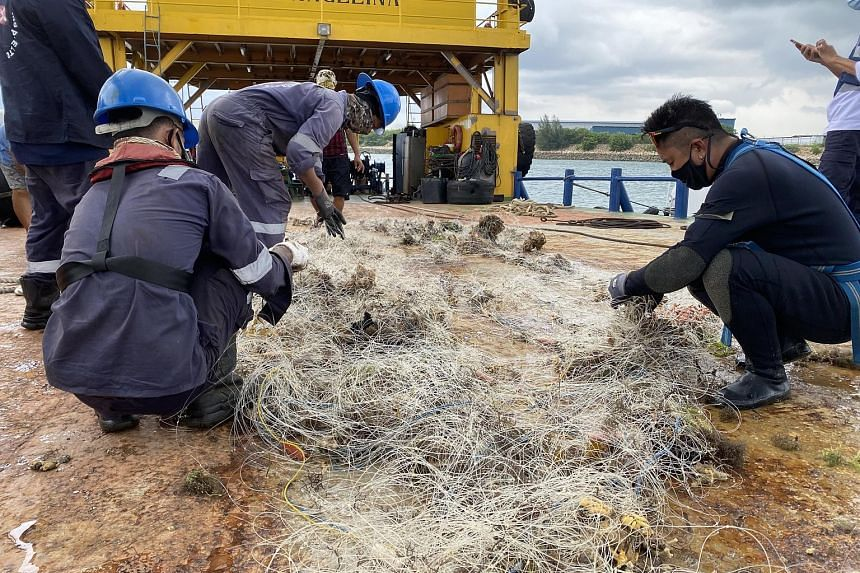 Volunteers worked with the Maritime and Port Authority of Singapore to retrieve a drift net on May 21 that likely caused the death of an endangered hawksbill turtle. Casualties of indiscriminate fishing practices include (from left) hard coral off La