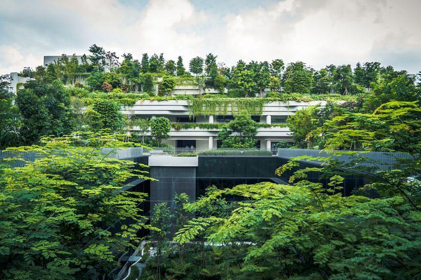 Kampung Admiralty greenery.