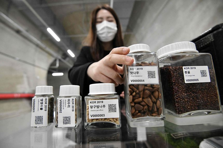 Left: A researcher with seed samples in a tunnel at the Baekdudaegan National Arboretum Seed Vault Centre in the south-eastern mountainous county of Bonghwa in South Korea. The vault preserves nearly 100,000 seeds from 4,751 different wild plant spec