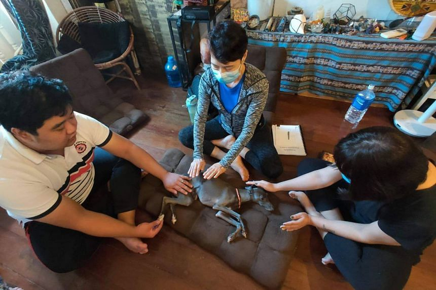 """Mr Ezekiel Ong (left) conducting an """"animal healing"""" workshop with his students."""