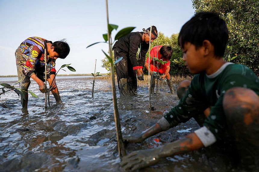 Indonesians planting mangrove saplings in West Java province. Mangroves protect coastlines from erosion and rising sea levels. They are also vital fish nurseries and soak up large amounts of CO2, making them a great natural climate solution.