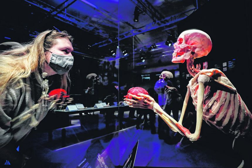 Plastinated human bodies (top and left) at the anatomical exhibition, Body Worlds, in Moscow, Russia. The exhibits are real bodies donated by their owners and painstakingly processed. The exhibition was created by Dr Angelina Whalley (above) and her