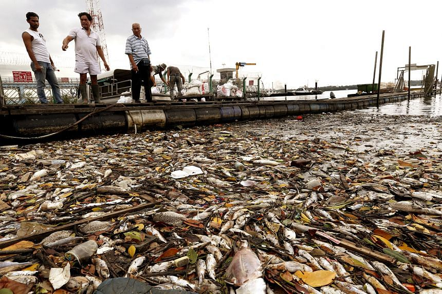 Hundreds of dead fish washed up along the shores of Lim Chu Kang jetty, after a wave of plankton bloom, on March 7, 2015.