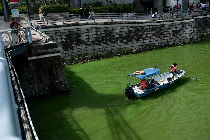 An algae bloom turned parts of the Singapore River an emerald green colour on Oct 2, 2017.