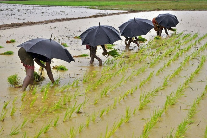 The early arrival of monsoon rains in central and northern India will help farmers accelerate sowing of summer-sown crops.