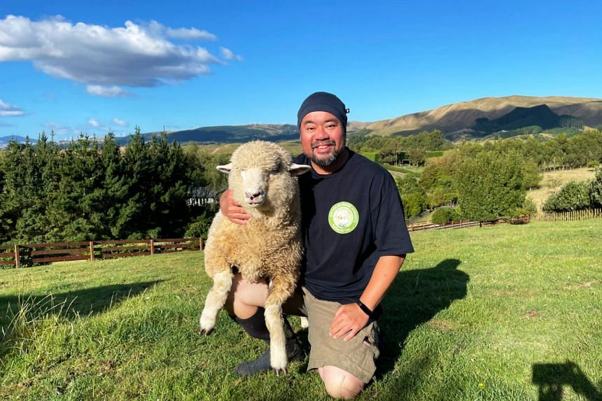 Dr Arthur Chin with his sheep on his farm in Palmerston North, New Zealand.