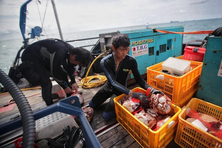 Divers bag and pack ceramic shards into mesh bags, before placing them in plastic crates.