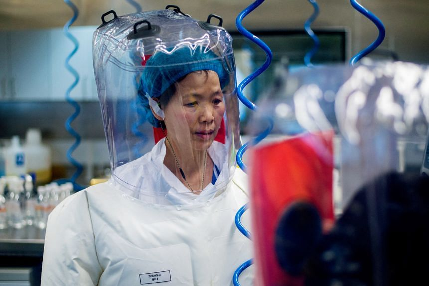Some scientists say Dr Shi Zhengli conducted risky experiments with bat coronaviruses in labs that were not safe enough.
