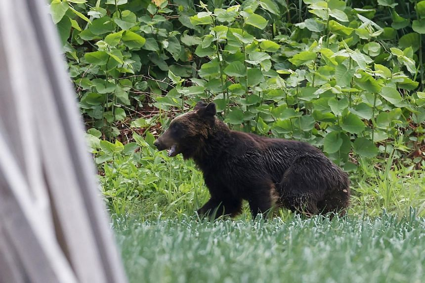 One soldier was injured in the bear's rampage in Sapporo, while another victim was attacked from behind.