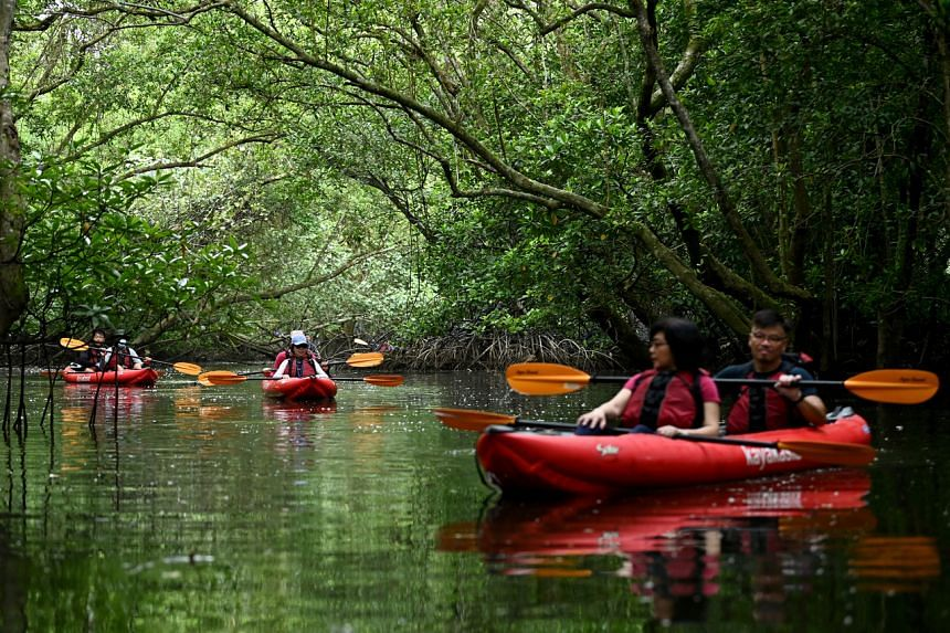 Kayakers exploring Sungei Khatib Bongsu in October 2020.