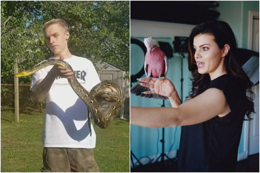 YouTubers Tomas Pasiecznik, with his reticulated python, and Marlene McCohen, with her galah cockatoo.