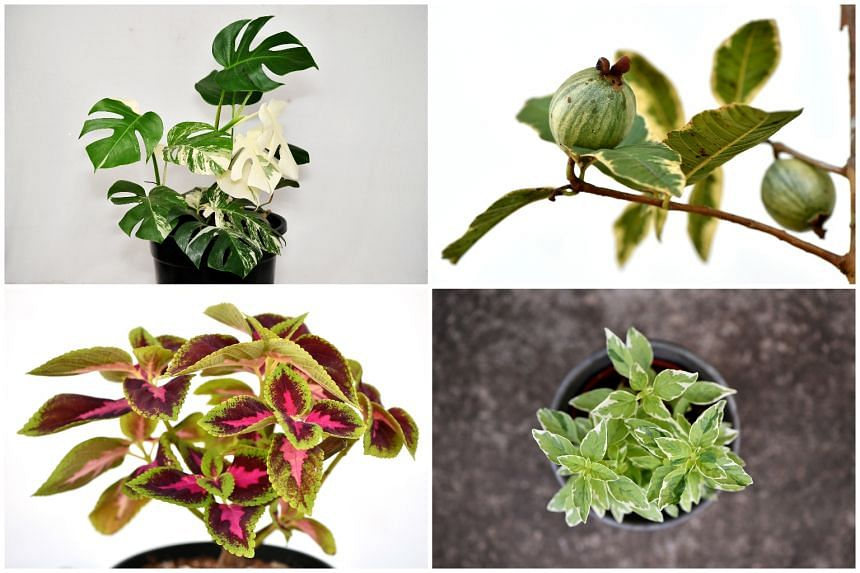 Select plants that suit your home environment for higher success rates.