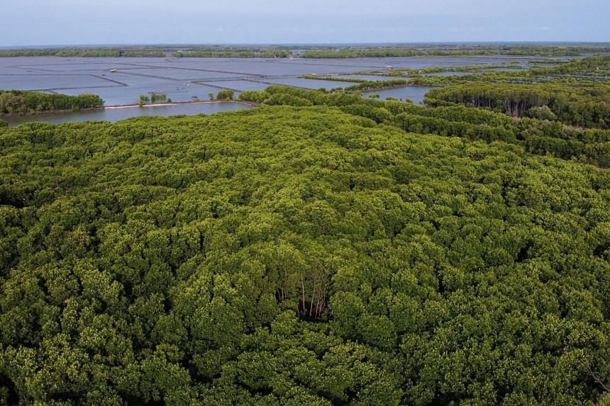 South-east Asia's land and ocean contain 35 per cent of mangrove forests and 30 per cent of coral reefs.