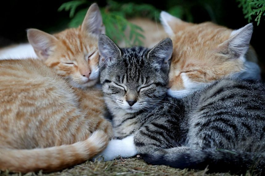 A study of 196 households found 31 cats and 23 dogs had antibodies for Covid-19.