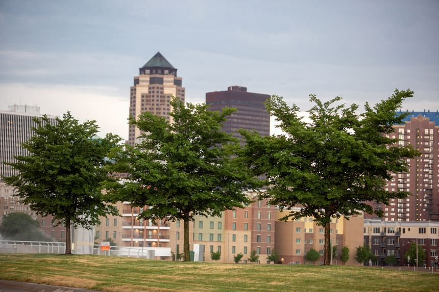 A group of trees grow on the Martin Luther King Jr. Parkway in Des Moines, Iowa.