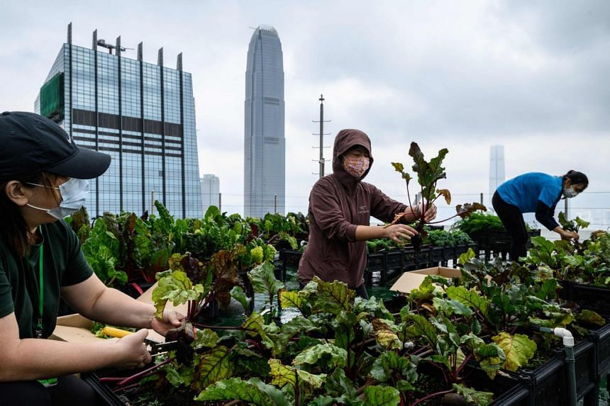 The farm is among more than 60 that have sprouted across the space-starved city since 2015.