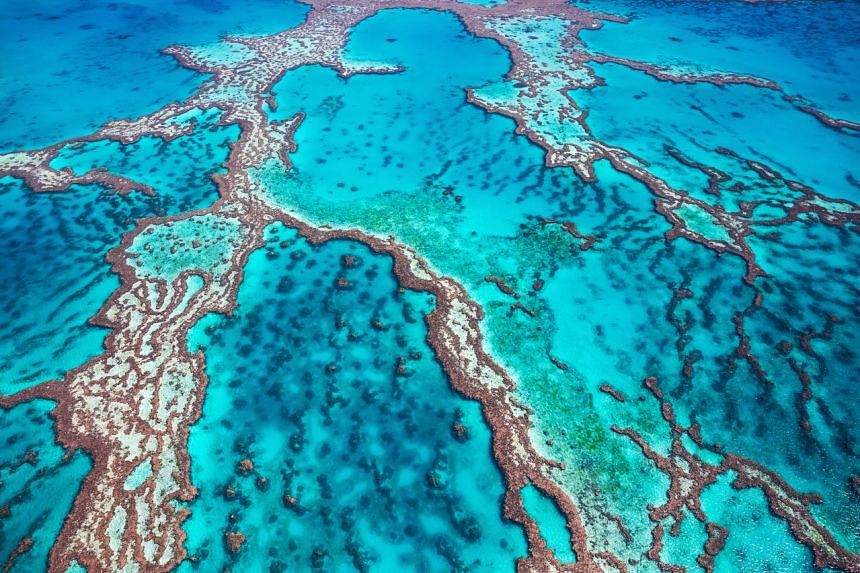 There is growing research that the reef is, indeed, under serious threat.