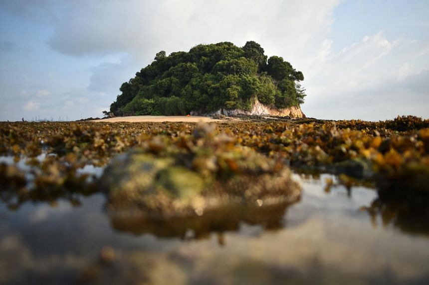 Countries are being urged to conserve 30 per cent of their land and sea territories by 2030.