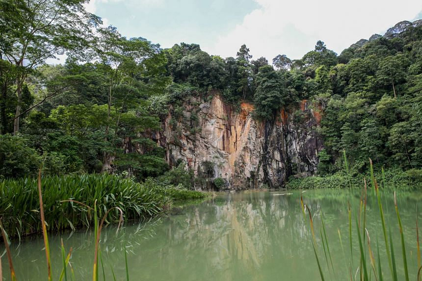 A hiker saw a slab of the Singapore Quarry breaking off and falling into the lake when he visited Dairy Farm Nature Park on July 11.