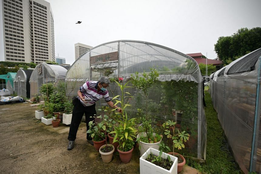 Sprout Hub is an urban farm and community space in Henderson Road.