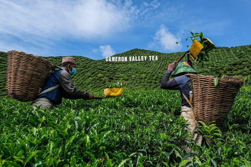 Vegetable, fruit and flower farmers in the highlands also complain of falling demand, problems finding workers and the rising cost of materials such as fertiliser.