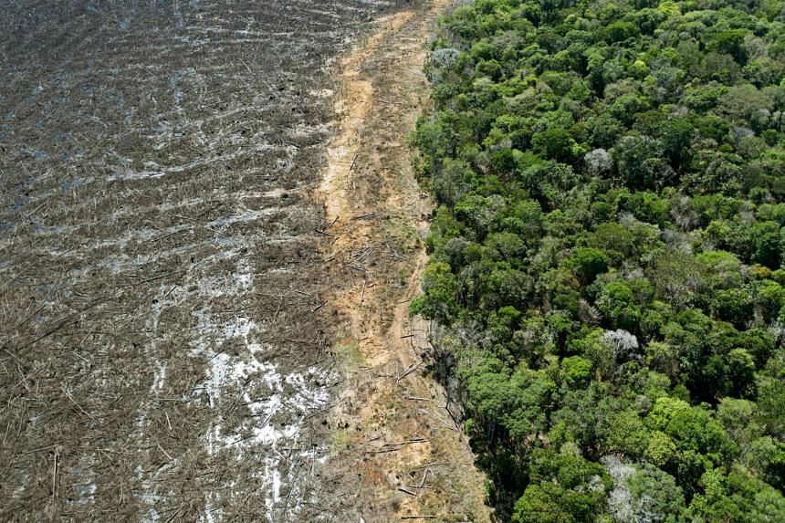 A 2020 aerial photo shows a deforested area of the Amazon rainforest close to Sinop, Mato Grosso State, in Brazil.