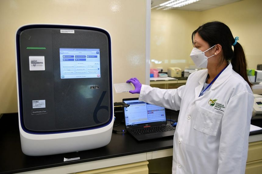 A laboratory staff loads a sample plate into the thermocycler to detect rabbit haemorrhagic disease by real-time polymerase chain reaction.