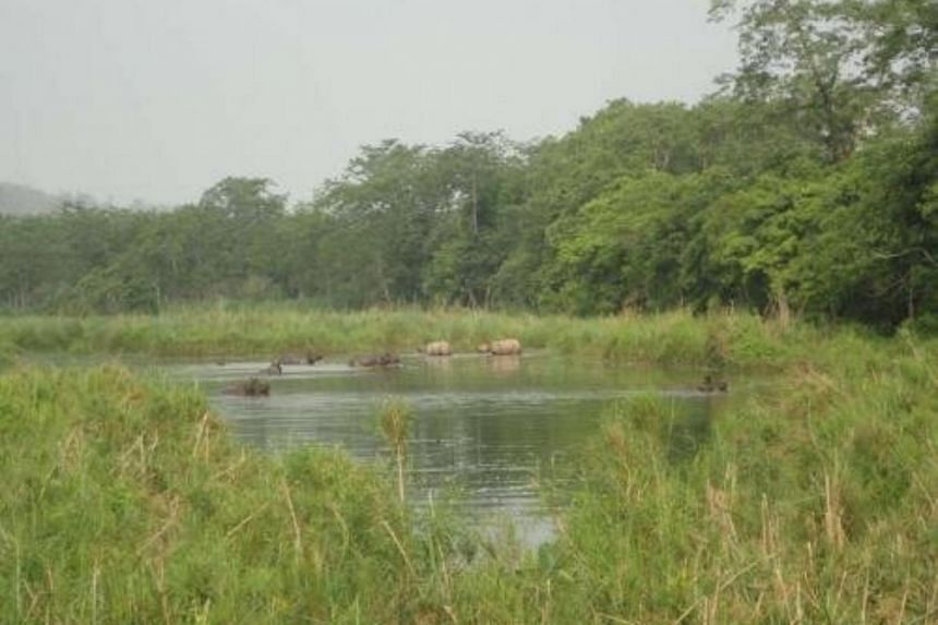 Like the grasslands, the park's wetlands also are under stress.
