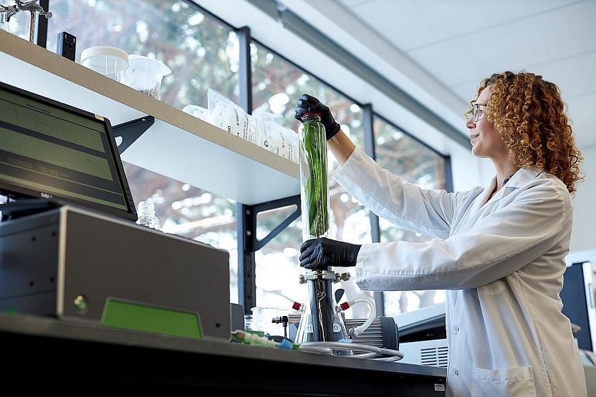 A Pivot Bio scientist in Berkeley, California, using a spectrometer to measure acetylene reduction activity in a plant sample. The start-up, which says its products take microbes that naturally occur in crop soils and use them to convert atmospheric