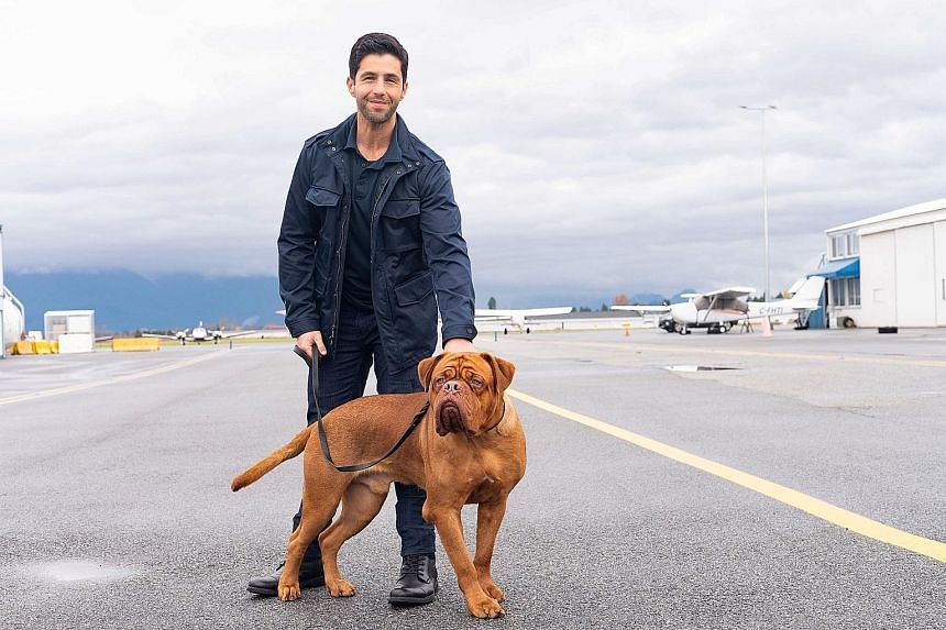 Josh Peck (left) plays Scott Turner Jr, a law-enforcement officer who inherits his father's newly adopted French mastiff pup, Hooch.