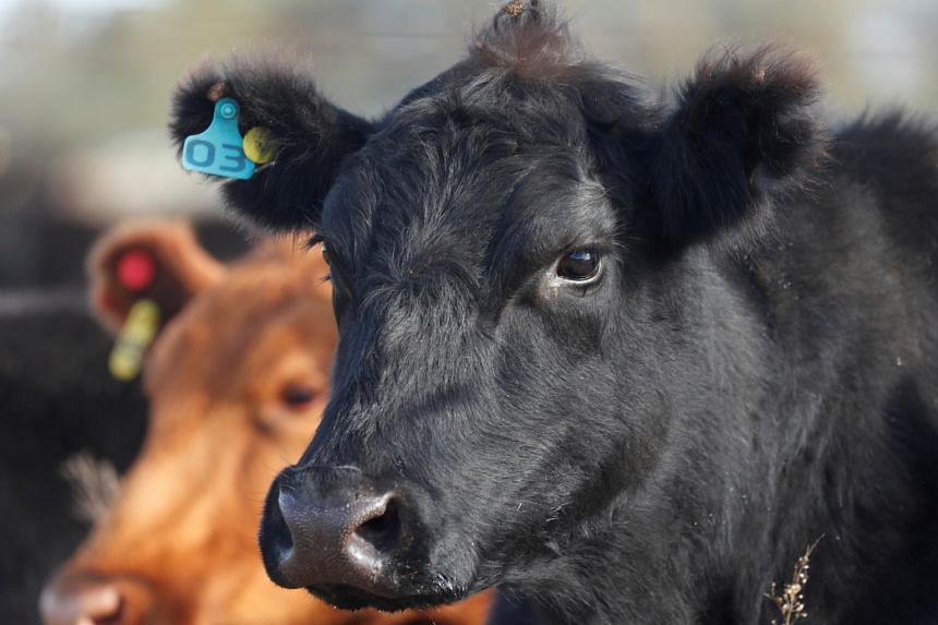 China found the disease in its own cattle herd last year.