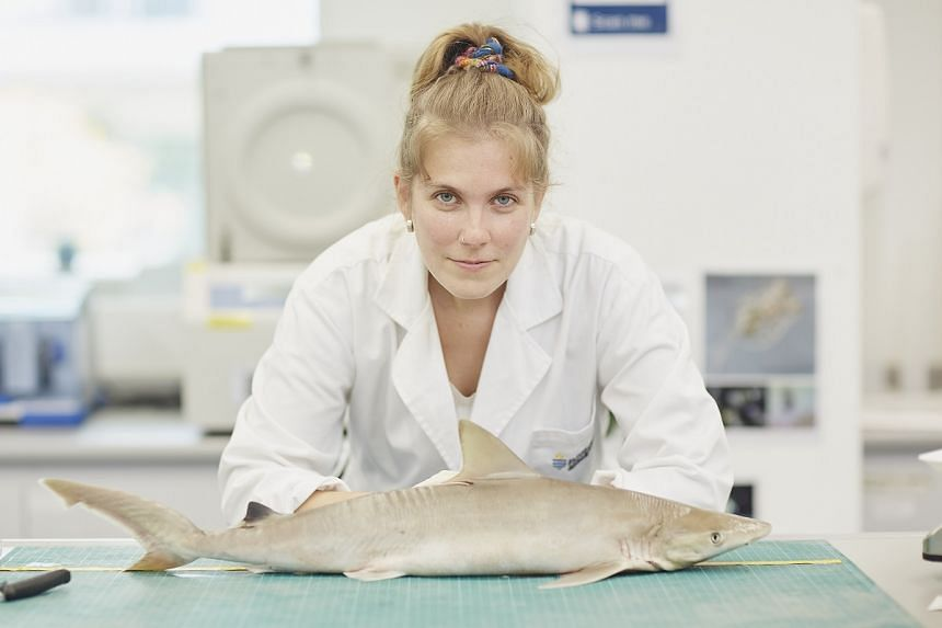 Ms Clark-Shen became interested in the little-known blackspot sharks and blue-spotted maskrays after doing a three-year survey of the sharks and stingrays found around Singapore's fishery ports. PHOTO: TED CHEN