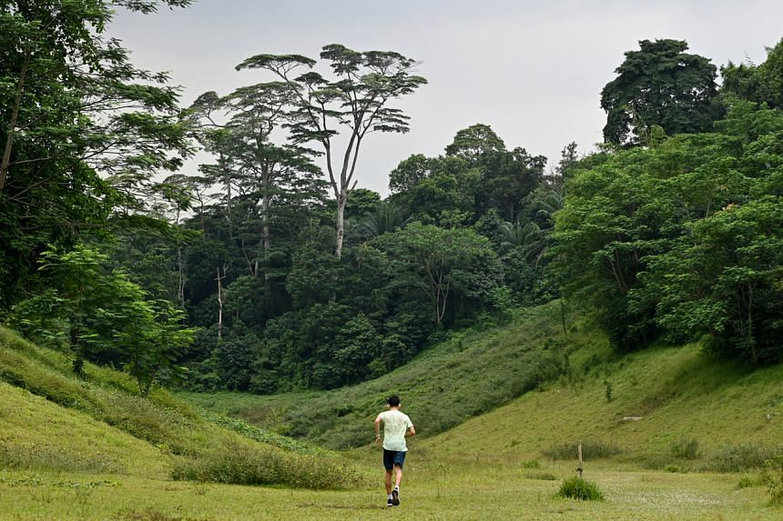 Sites along this corridor include forested plots at Clementi, including the Clementi Forest.