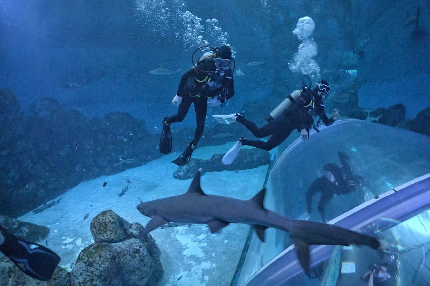 In recent months, the S.E.A Aquarium's diving programmes have grown popular among a travel- hungry crowd.