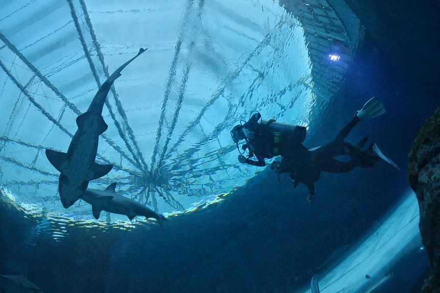 The shark dive is fully booked until October.