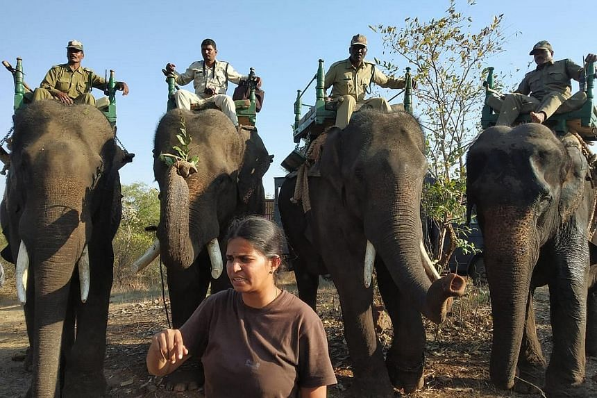"""Ms Abharna K.M., an Indian Forest Service officer, has battled patriarchy and poachers since joining the service in 2013. She said she has developed a """"thick skin"""" so she is not bothered by sexist comments or actions."""